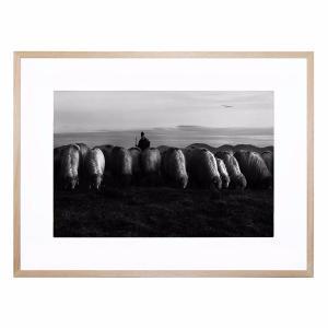 Stare - Framed Print