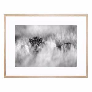 Subtle Mane - Framed Print