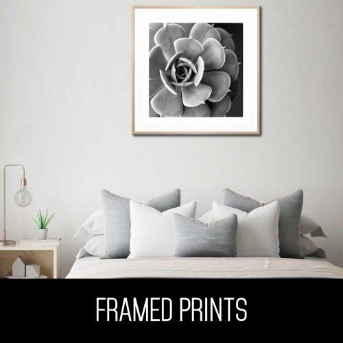 monochrome black and white botanical framed prints